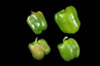 bell_peppers_solar_yellowing