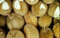 durian_quality