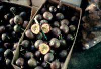 passion_fruit_quality2