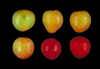 plums_ripeness_stages