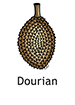 Durian_French250x350