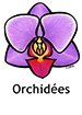 Orchid_French250x350