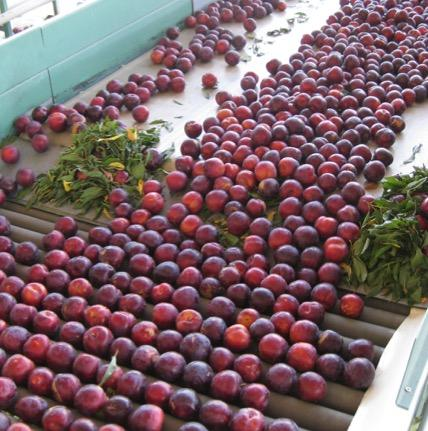 Plum Packing