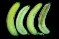 banana_impact_bruising