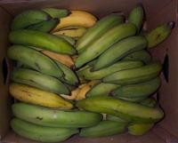 Banana_RipeningVariability