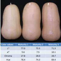 Butternut Squash External Color Value