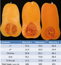 Butternut Squash Internal Color Value