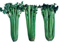 celery_freezing_damage2