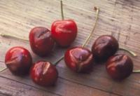 cherryradialcracking