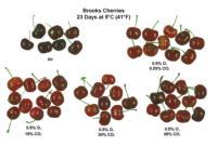 Cherry_CA _effects1500x1014