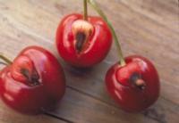 cherry_doubles2