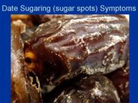 Date-Sugarspotting