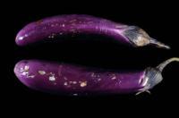 eggplant_pitting