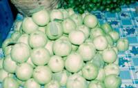 Guava_quality2