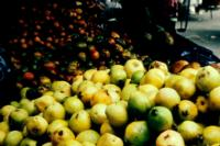 guava_quality3