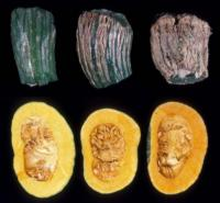 Kabocha Maturity Stages