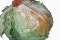lettuce_crisphead_rusty_discoloration
