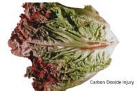 lettuce_leaf_carbon_dioxide_injury