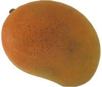 mango_lenticel_spotting