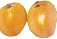 mango_stem_end_cavity