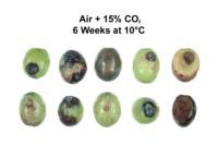 olives_CO2_Injury