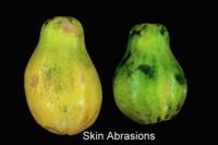 papaya_skin_abrasions
