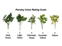 parsley_color rating_scale
