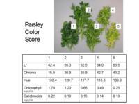 Parsley_color_scores960x720
