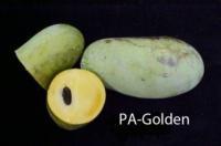 pawpaw-Golden