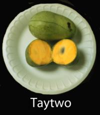 pawpaw-Taytwo
