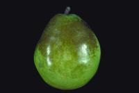 pear_scald