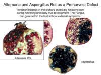 pomegranate_heart_rot