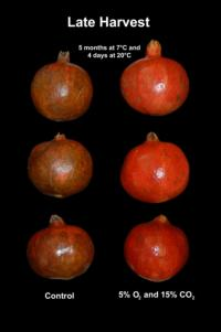 pomegranate_scald2