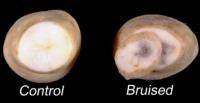 potato_early_crop_bruising