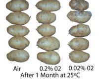 potato_low_oxygen_effects