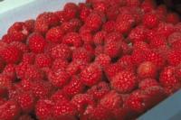 Raspberries-quality