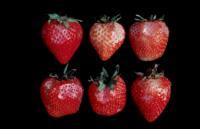 strawberry_abrasion_damage