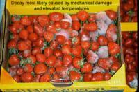 strawberry_mechanical_damage