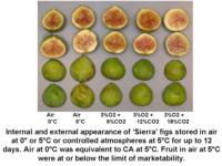 Temp_and_CA_effects_on_Sierra_figs960x720