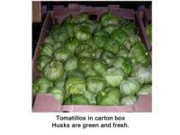 Tomatillo_fresh_green_husks