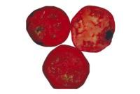tomato_alternaria_rot3