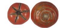 tomato_cracking