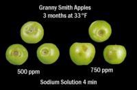 apple_grannysmith_burn_skins700x462