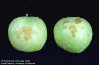 apple_grannysmith_dpa