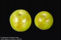 apple_grannysmith_storagescald732x483