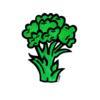 broccoli069