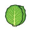 cabbage008