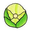 crisphead lettuce004
