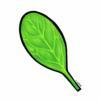 spinach091