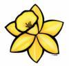 daffodil001-2